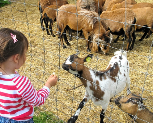 Encounters with animals in Essonne